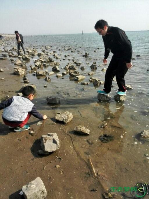 暖春时节,赶海拾贝(2014年4月20日,天津中心渔港)